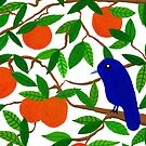 Blue bird on an orange tree by idriera