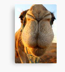Candid camel Canvas Print