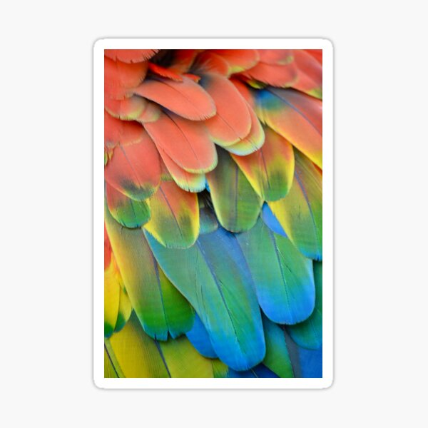 Close Up Parrot Feathers Sticker