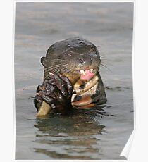 Otter munchies Poster