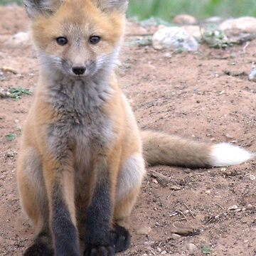 Another Baby Fox by livehonestly