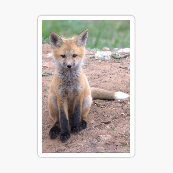 Another Baby Fox Sticker