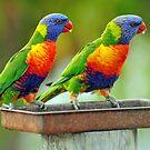 Rainbow Lorikeets In Our Garden. Brisbane, Queensland,  Australia by Ralph de Zilva