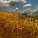 Ode to Wyeth by chrissylong