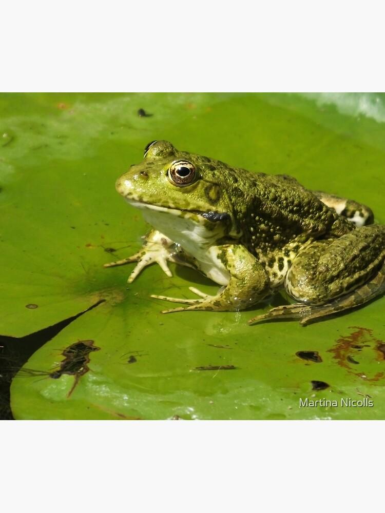 Green frog, green lily pad by martina