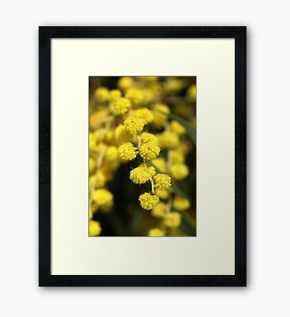 Little Aussie Gold Framed Print