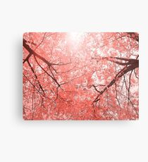 Cherry tree blossoms in Living Coral Pantone color 2019 Metal Print
