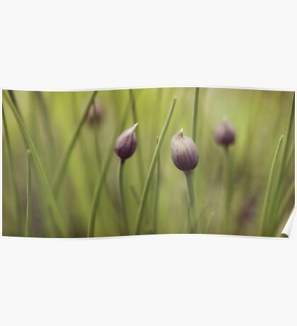 Pastel Chives Poster