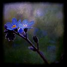 Forget-Me-Not by Shelly Harris