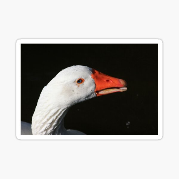 Goose portrait Sticker
