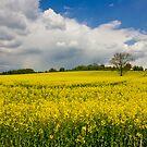 Summer Fields in Staffordshire by Steven Cliff