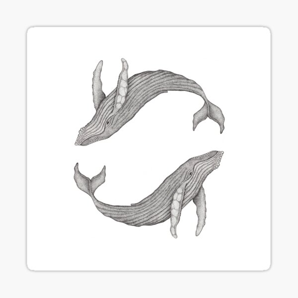 Megaptera Novaeangliae [Ted] II Sticker