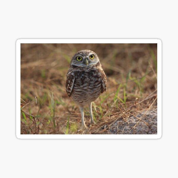 the little owl Sticker