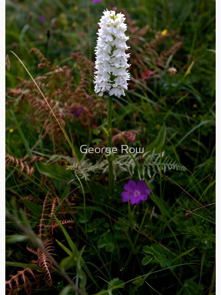 Irish White Orchid, Inishmore by VeryIreland