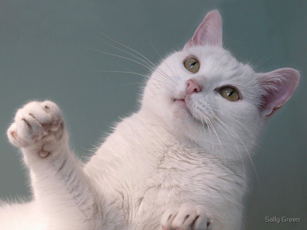 Talk to the Paw!!  by Sally Green