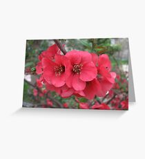 A beauty of Spring Greeting Card