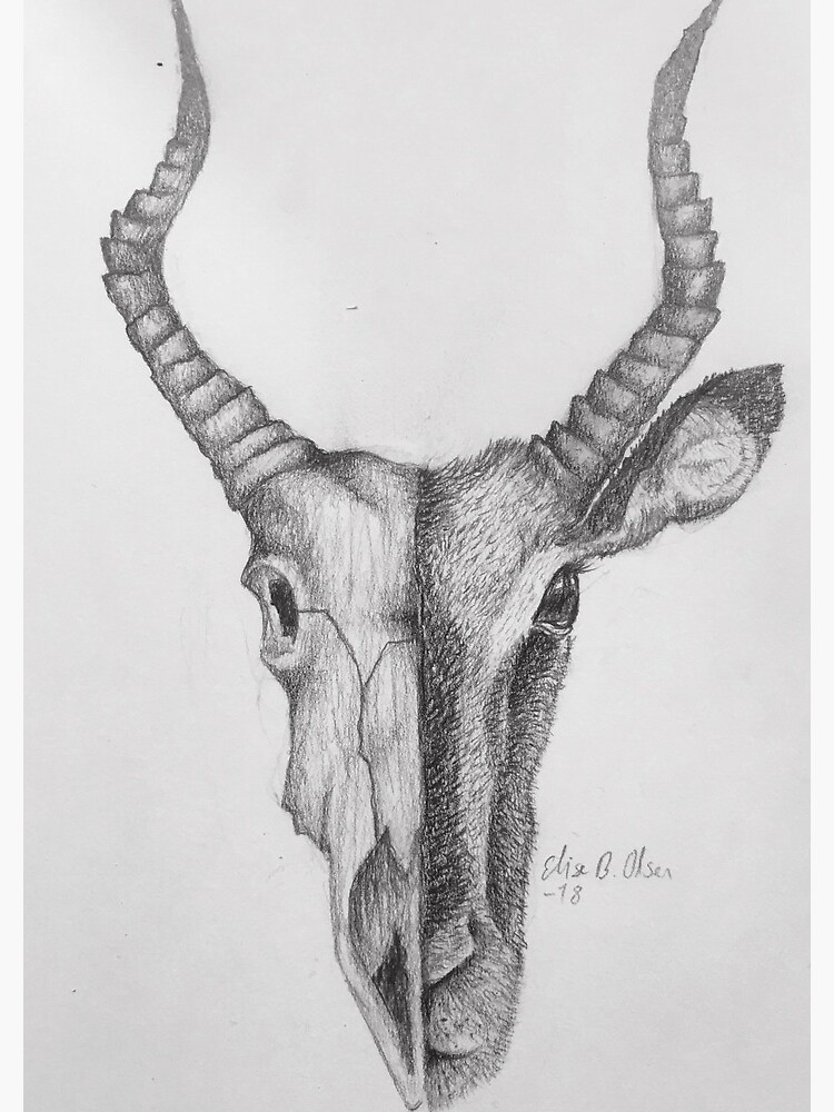 Gazelle and skull sketch by ElisesArtShop
