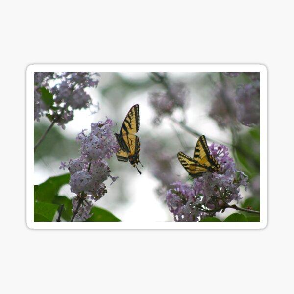 Where the Butterflies Go Sticker