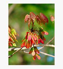 New Leaves Budding Photographic Print