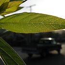 The Leafy Veins of Highland Parque by Jennifer  Gaillard