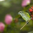 Tiny Green Perched Bird by Jason Pepe