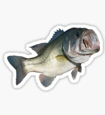 Largemouth Bass  Sticker