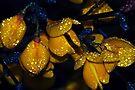 Delicate Drops by Tori Snow