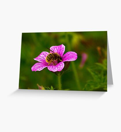 Foraging Greeting Card