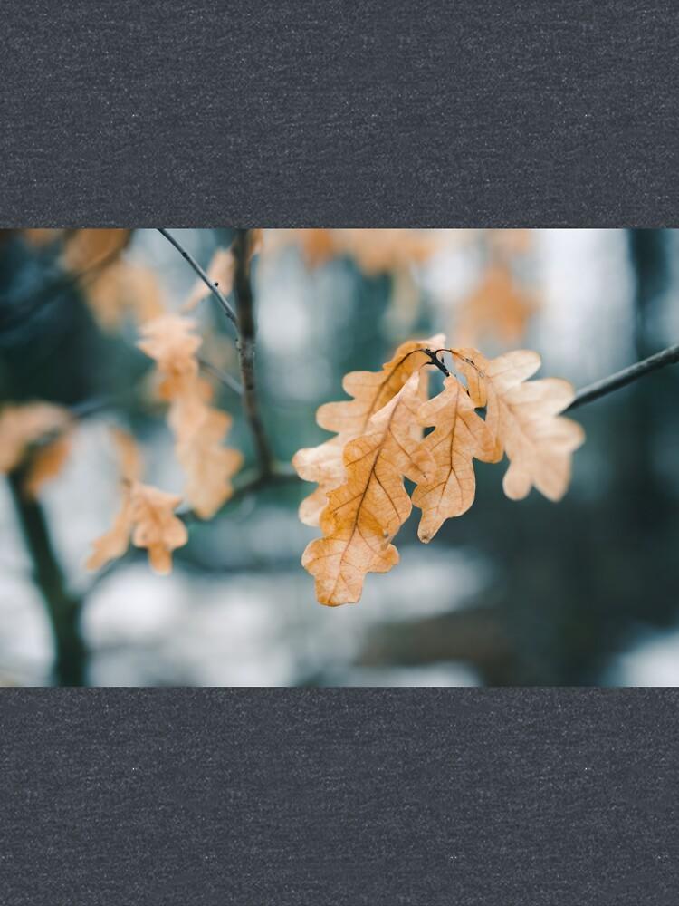 Dry yellow leaves in small oak tree by Juhku