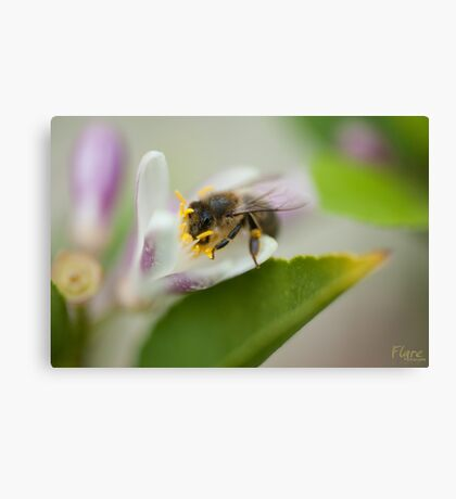 Bee Beautiful Canvas Print