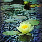 Water Lily by Louise  Bishop