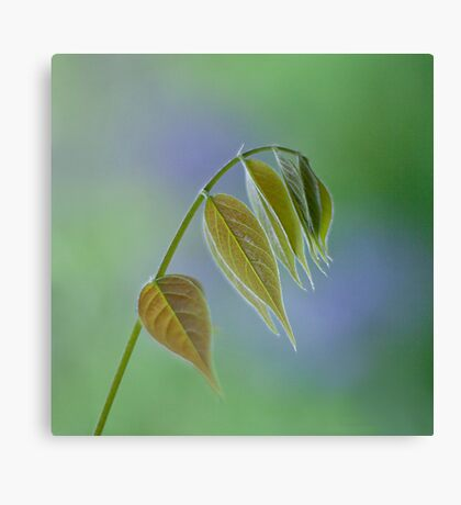 The simple things in life Canvas Print