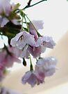 Blossom Sparkle by AnnDixon