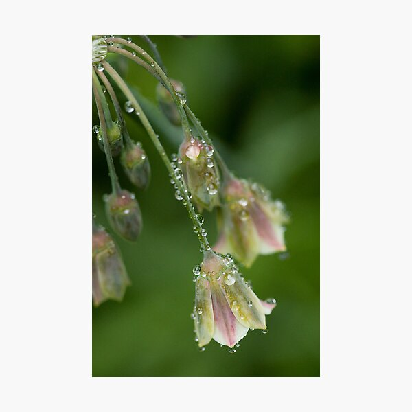 Bubbles and Bells Photographic Print
