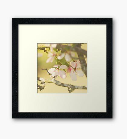 Sakura Sunshine Framed Print