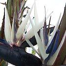 Bird of Paradise Palm Tree by wayatsagi