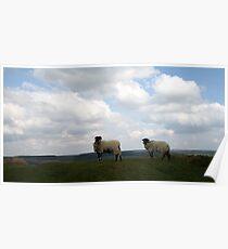 Sheepscape Poster