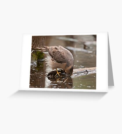 Having a drink  Greeting Card