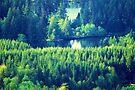 Lake Kapowsin by Tori Snow