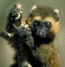 Lemur eyes by Anthony Brewer