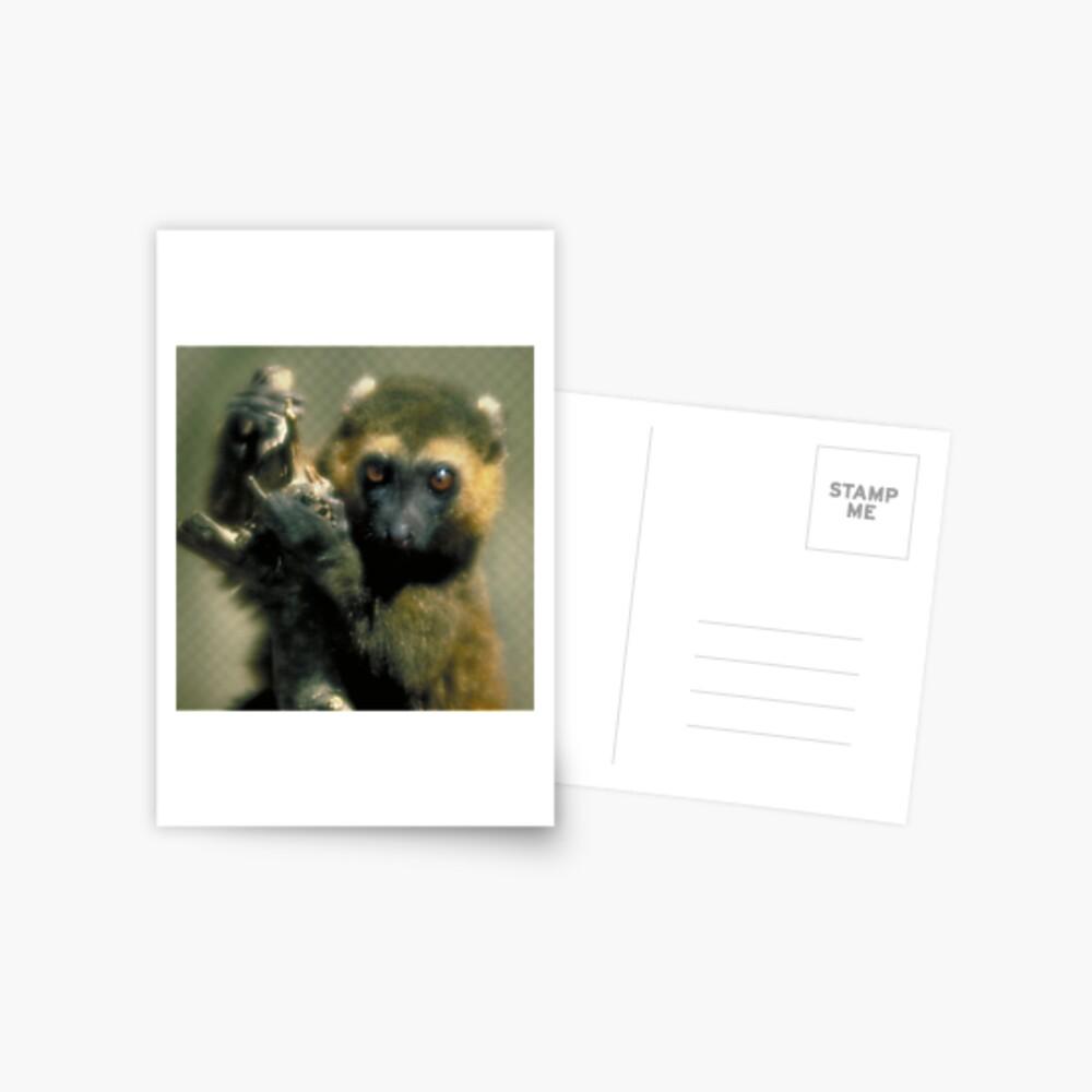 Lemur eyes Postcard