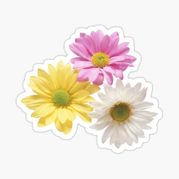 Graceful gerbera Sticker