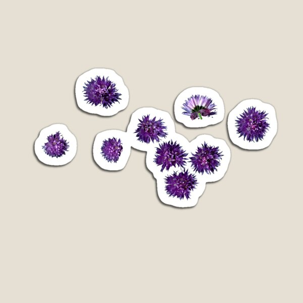 chives blossoms II Magnet