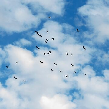 Birds flying in the clouds by HaleyRedshaw