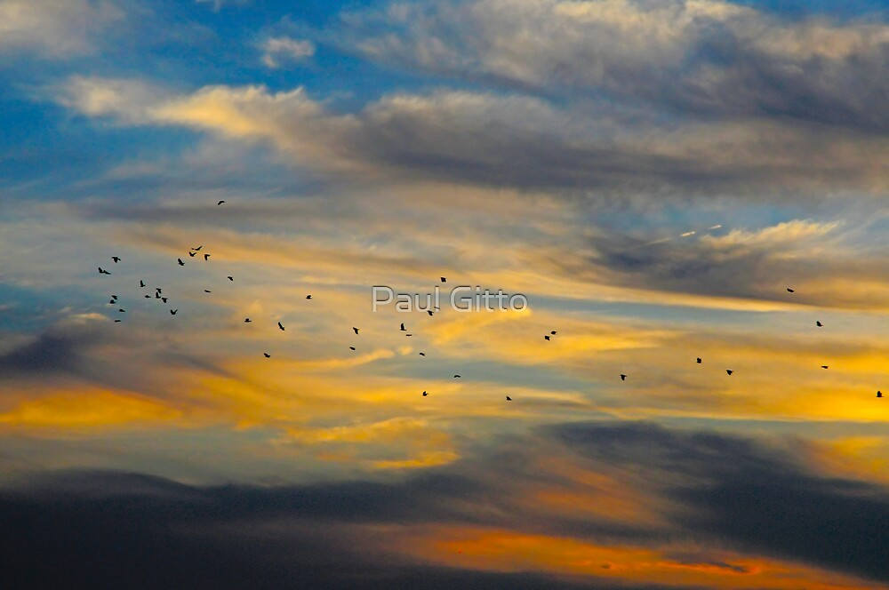 Birds of a Feather by Paul Gitto