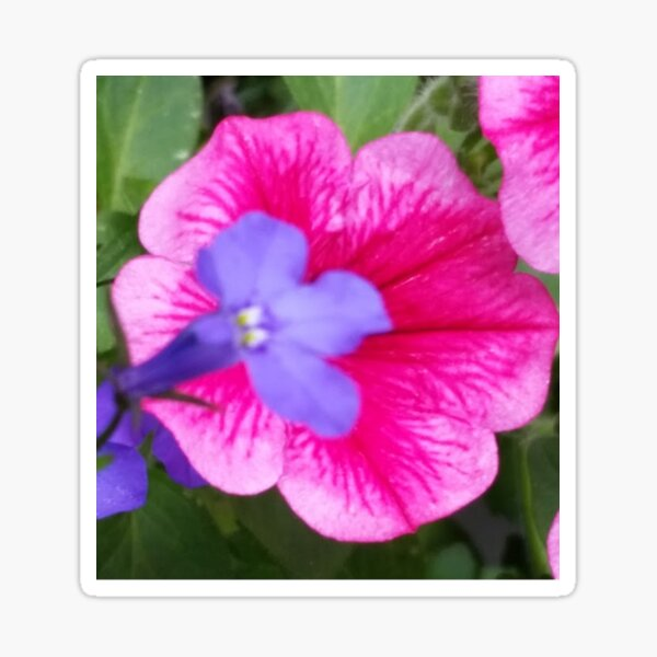 Purple and Pink Bloom Collection Sticker