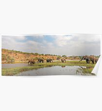 Elephants crossing the Chobe River Poster