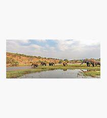 Elephants crossing the Chobe River Photographic Print