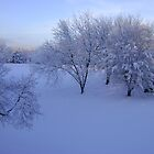 Winter Wonderland by Jaclyn Hughes