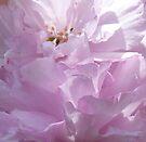 Sunlight on spring blossom by © Pauline Wherrell